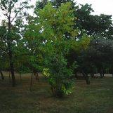 photo5060